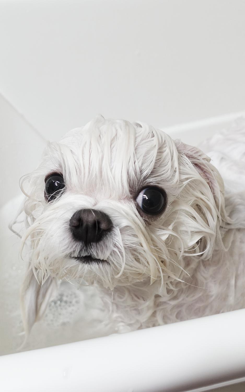 Aysia get a bath